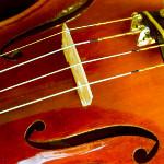 Amicus Orchestra Concert