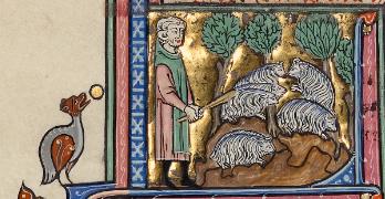 Shepherd with sheep (manuscript)